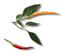 fresh-peppers.png